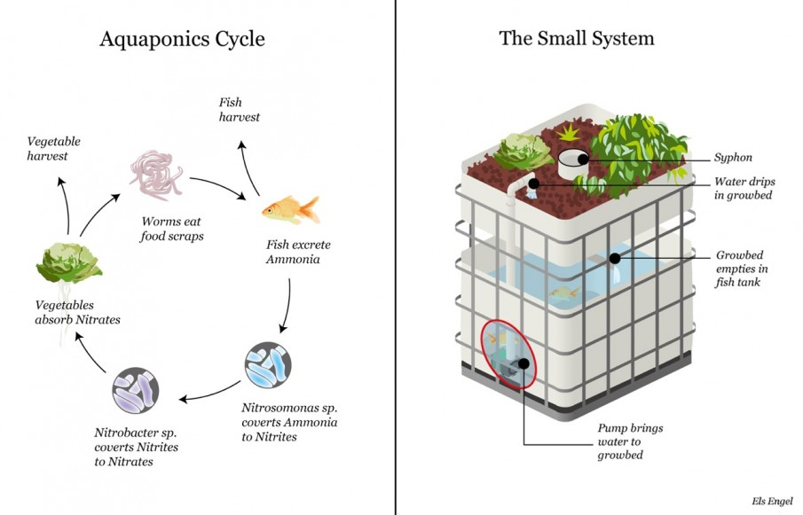 aquaponic-system-drawing-905x581