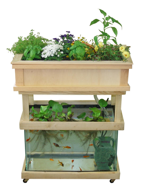 diy-aquaponics-fish-tank-5